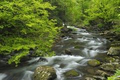 Весна в Tremont на большом национальном парке закоптелых гор, TN США стоковые изображения rf