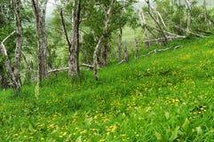 весна горного склона Стоковая Фотография RF