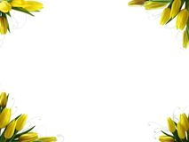 весна граници Стоковые Фото