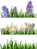 весна границ Стоковое Изображение