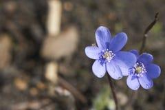 весна детей Стоковая Фотография