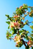 весна дня Стоковые Фотографии RF