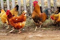весна дороги куриц крана птиц стоковое фото