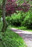 весна дороги парка Стоковое Фото