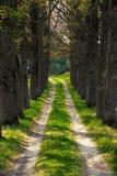 весна дороги Стоковая Фотография RF