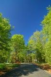 весна дороги стоковое изображение rf