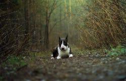 Весна леса собаки Стоковая Фотография RF