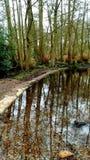 Весна леса Стоковое Изображение RF
