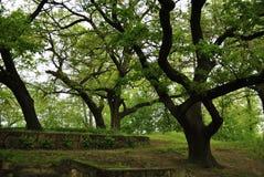 Весна леса Стоковое фото RF