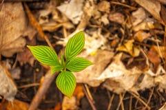весна жизни новая Стоковые Изображения RF