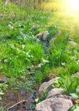 весна заводи Стоковая Фотография RF