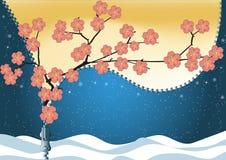 Весна заменяет зиму Цветение Сакуры Стоковое Изображение