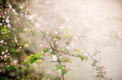 весна, зацветая в тумане стоковое изображение rf