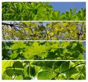 весна зеленого цвета пущи Стоковая Фотография RF