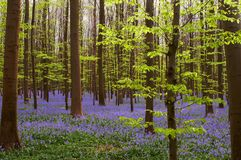 весна зеленых цветов син Стоковые Фото