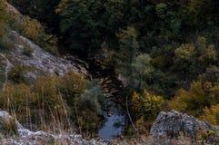 весна зеленого цвета травы крупного плана стоковое фото rf