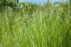 весна зеленого цвета травы Стоковое Фото