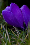 весна знака Стоковая Фотография RF