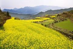 весна золота Стоковое Изображение RF