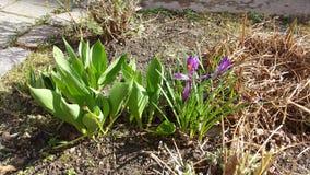 Весна здесь Стоковые Изображения