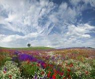 весна идиллии Стоковые Фотографии RF