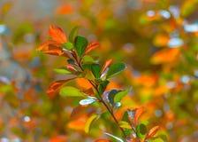 Весна Избежание молодых заводов Разветвите с молодое сочным Стоковые Фото