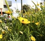 весна Израиля Стоковые Фотографии RF