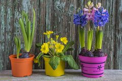 Весна или концепция пасхи Стоковое Изображение RF