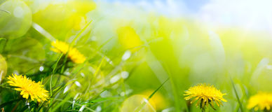 Весна искусства абстрактные флористические или предпосылка лета Стоковое фото RF
