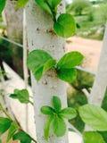 Весна лист Стоковые Фотографии RF