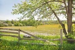 Весна или ландшафт лета. Солнечный день. Стоковая Фотография