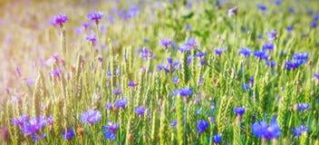 Весна и предпосылка лета цветков на зеленом луге на яркий солнечный день Стоковые Изображения RF