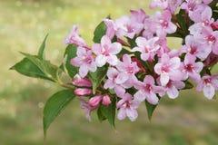 Весна и розовое цветение красивейшее место природы Стоковые Фотографии RF