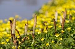весна канала банка стоковая фотография rf