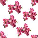 весна картины цветков безшовная стоковые фотографии rf