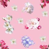 весна картины цветков безшовная стоковая фотография