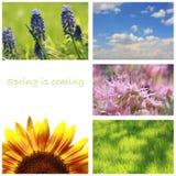 весна коллажа Стоковые Фотографии RF