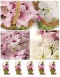 весна коллажа Стоковая Фотография RF
