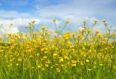 весна контраста Стоковое фото RF
