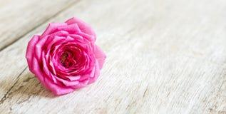 Весна, концепция весеннего времени - розовый цветок Стоковая Фотография RF