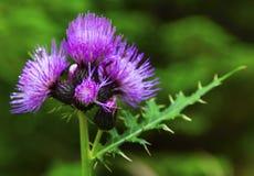 весна красивейших цветков свежая Стоковое фото RF