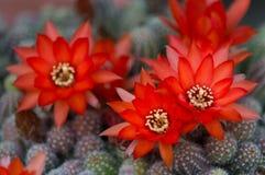 Весна красного цвета Стоковое Фото