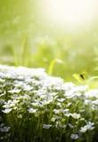 весна красотки искусства Стоковое фото RF
