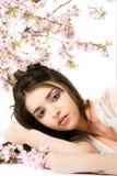 весна красотки Стоковое Изображение
