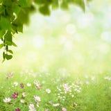 Весна красоты и ландшафт лета Стоковые Изображения