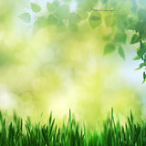 Весна красоты и ландшафт лета Стоковое фото RF