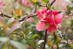 Весна красоты Стоковые Фотографии RF