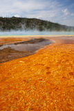 Весна красочной циновки бактерий окружающая грандиозная призменная Стоковые Изображения RF