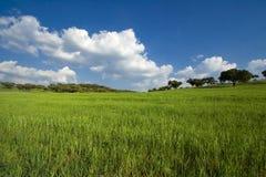 весна ландшафта поля Стоковая Фотография RF