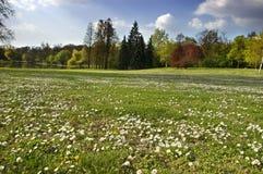 весна ландшафта Стоковое Изображение RF